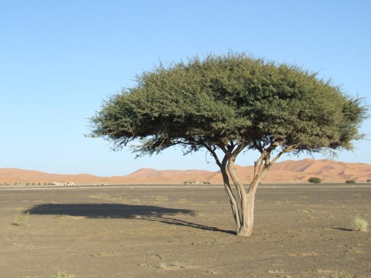 Marroc2007 750